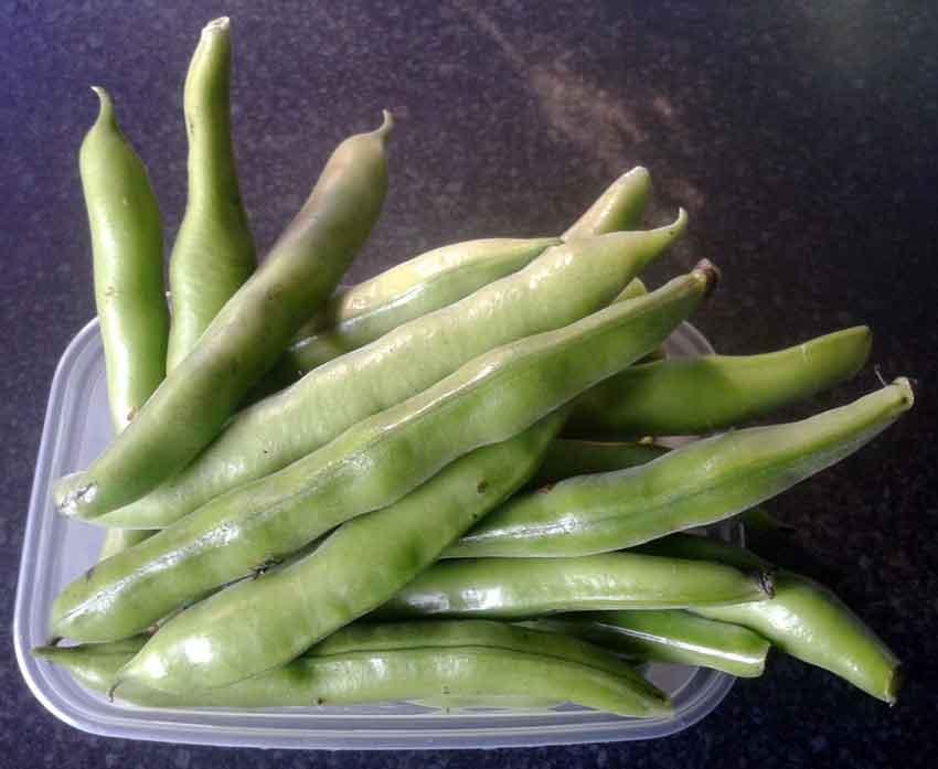 broad-bean-the-sutton-july-13 | MandyCanUDigIt