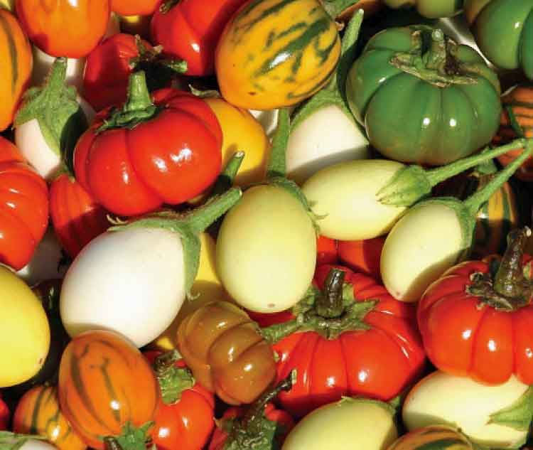 solanum-deco-fruits-mixed