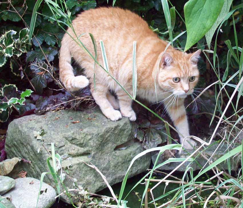 George - more interested in grass than birds