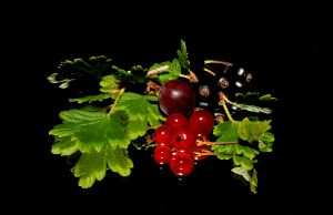 Using your blackcurrants and red berries