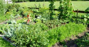 The joy of growing your own food with an allotment