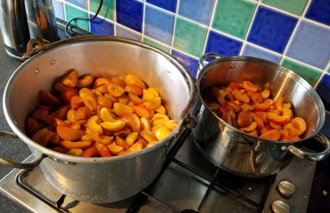 Quartered, stoned and cleaned apricots in pans