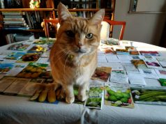 George 'helps' to sort out the seeds