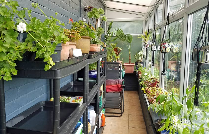 New-look conservatory with most tender plants in