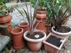 Newly planted winter pots